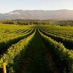 Wineries Around Melbourne - Sparkling Wines and Stellar Scenery